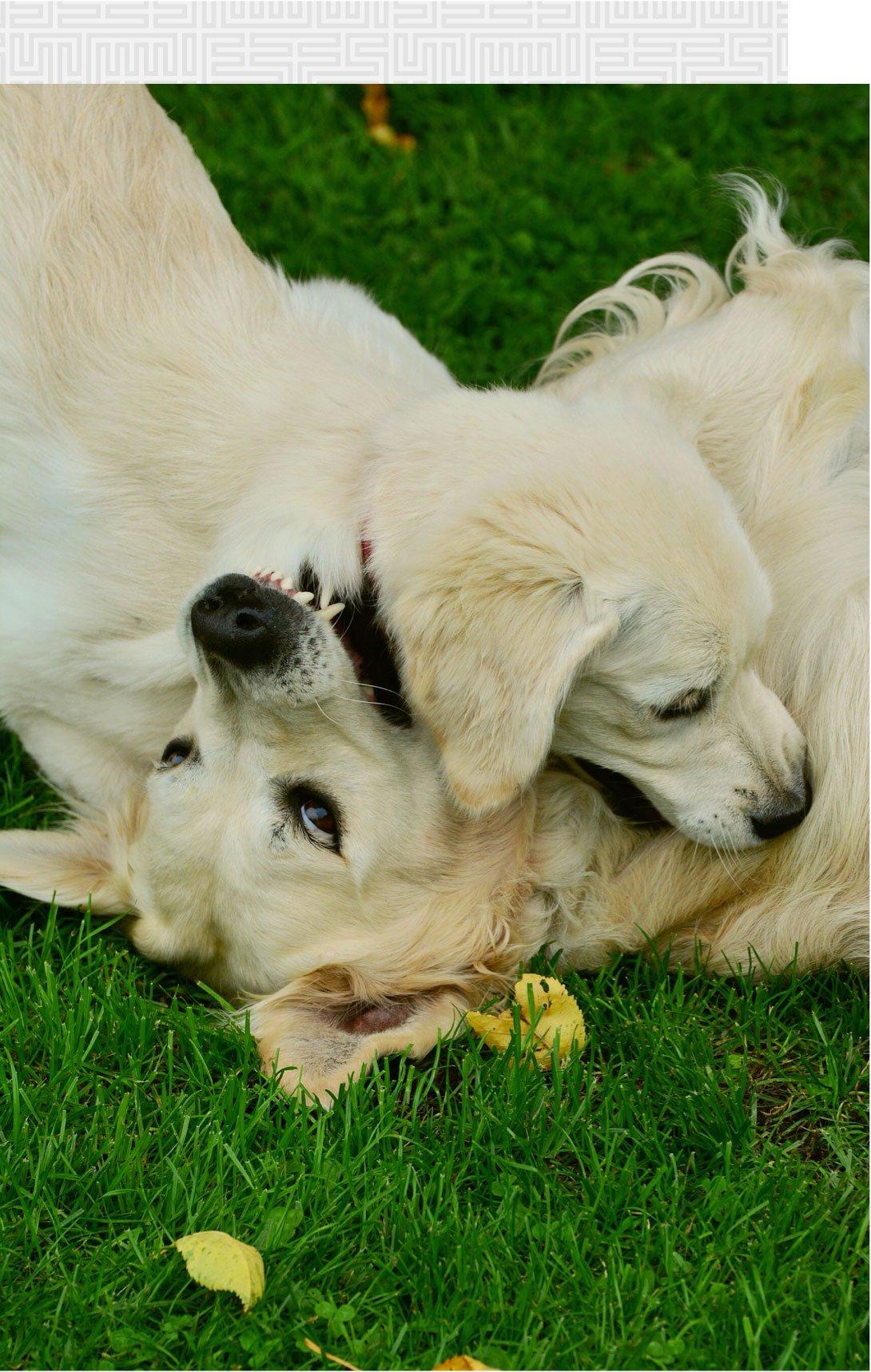 Dog Bite Law in California